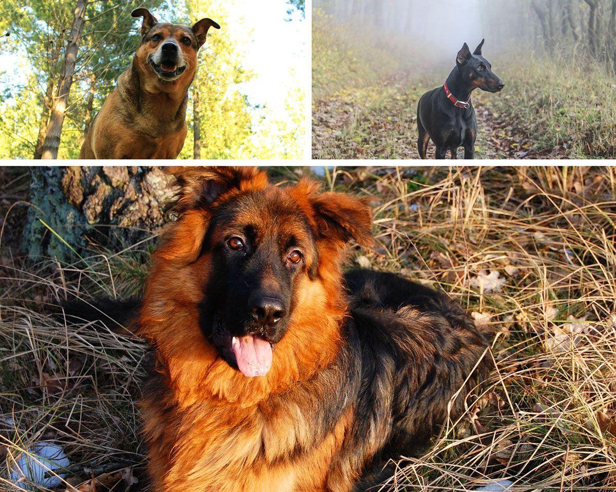 el camino de santiago con el perro