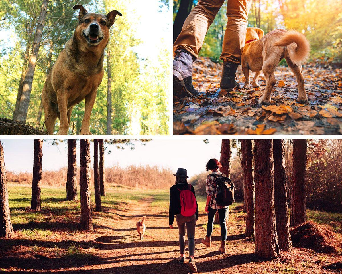 camino de santiago con el perro