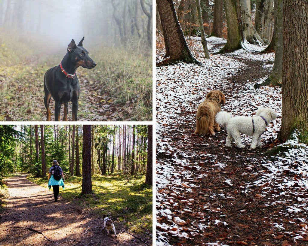 Cuál es la mejor época del año para hacer el camino de santiago con el perro